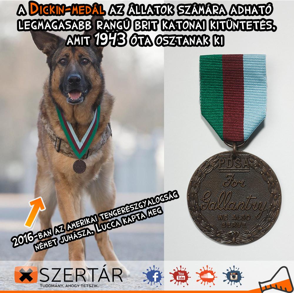 dickin_medal_post